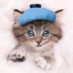 Mengenal Secara Ringkas Flu Pada Kucing Dan Bagaimana Mengatasinya